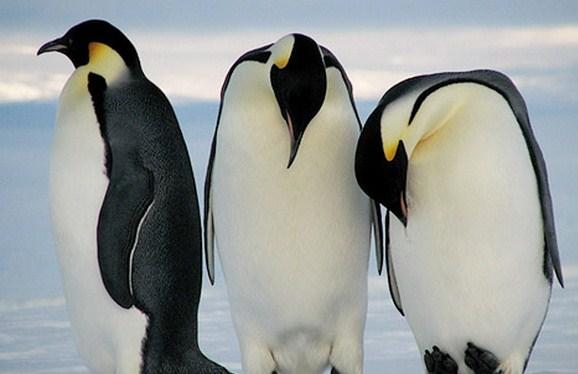 penguins_copy